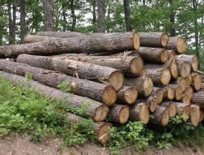 橡胶木板料生产解决方案